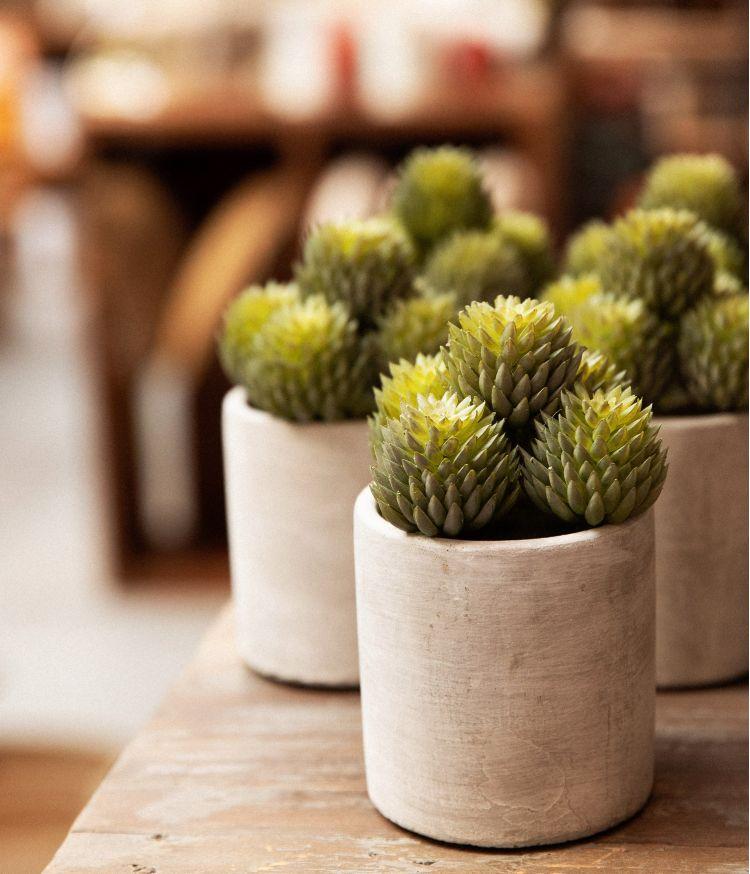 Plante artificielle en pot